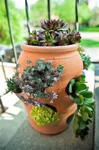 35 best garden strawberry pots images on