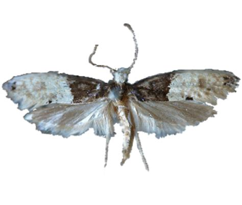 tarme tappeti tarme insetti dei tessuti e tappeti rentokil italia