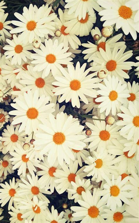 imagenes para celular we heart it fondos we heart it flowers imagui