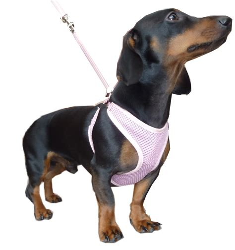 puppy pull harness deals on 1001 blocks
