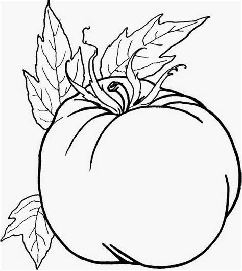 gambar sketsa mewarnai sayuran tomat bahasa pendidikan bahasa pendidikan