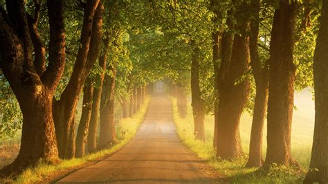 trees road wallpapers