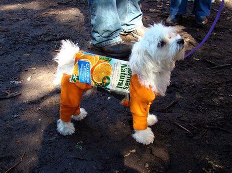 juice for dogs orange juice vegan recipes