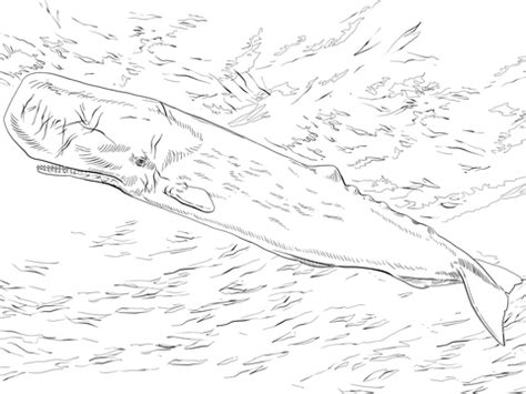 sperm whale or cachalot coloring page supercoloring com