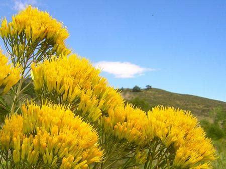 fiori californiani elenco fiori californiani le essenze r s pollicegreen