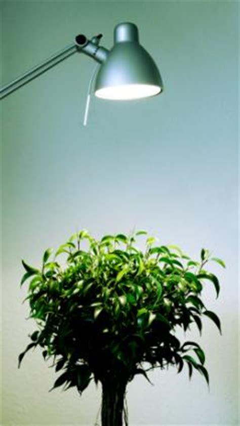 best grow light for bonsai new bonsai owner helpfulgardener com