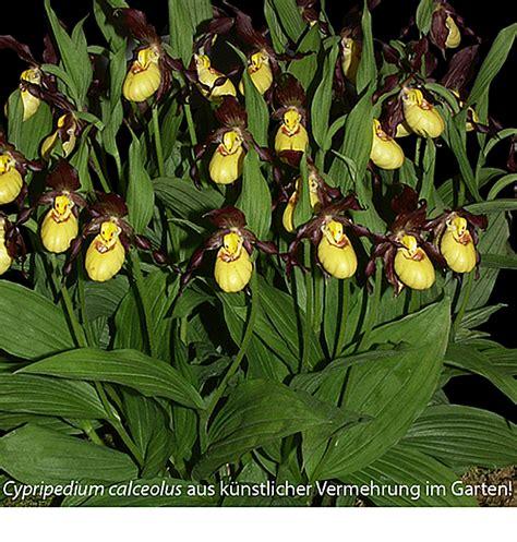 Orchideen Im Garten by Orchideen Im Garten