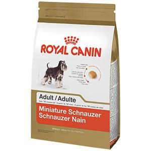 best food for miniature schnauzer puppy royal canin breed health nutrition miniature schnauzer food