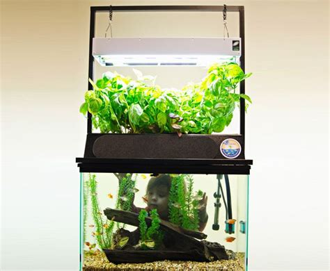 eco cycle aquaponics kit turns   gallon aquarium