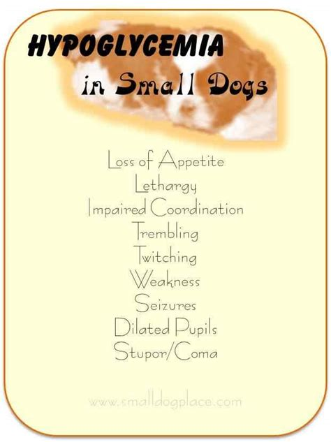 hypoglycemia in puppies small health