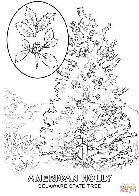 indiana state tree coloring page delaware state tree coloring page free printable