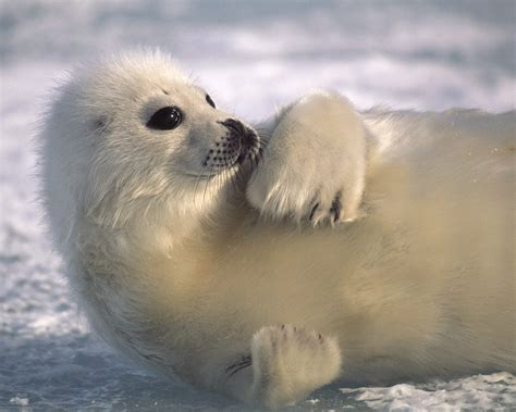 animal pictures animals images animals wallpaper photos 31477067