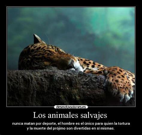imagenes de animales salvajes con frases imagenes de animales salvajes con frases de amor imagui