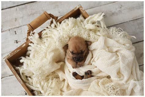newborn puppy photoshoot teeny shelter puppies get an adorable newborn photoshoot