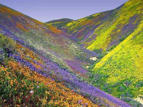 fiori deserto biosfera noosfera