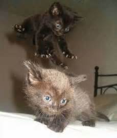 Funny fight animals cats fight funnypica com