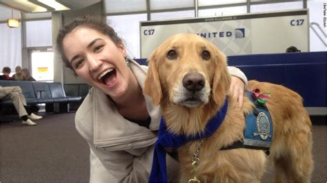 what is a comfort dog united airlines brings in comfort dogs to help reduce