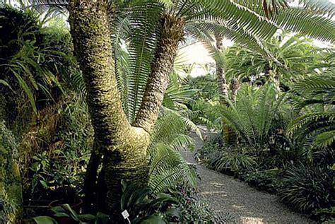 botanischer garten münchen lange nacht der museen lange museumsnacht auch im botanischen garten nachts im