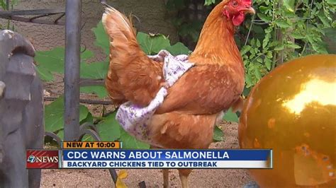 cdc warns about salmonella from backyard chickens