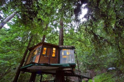 tiny treehouse cabin   redwoods