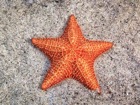 starfish colors 12 surprising facts about starfish