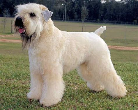 list of all breeds list of medium breeds breeds picture