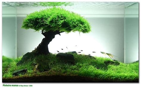 bonsai aquascape bonsai aquarium things pinterest fish tanks fish