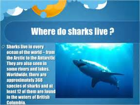 where does live sharks