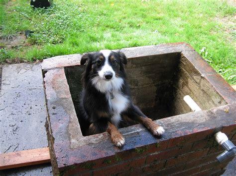 posh puppy a posh house the henries