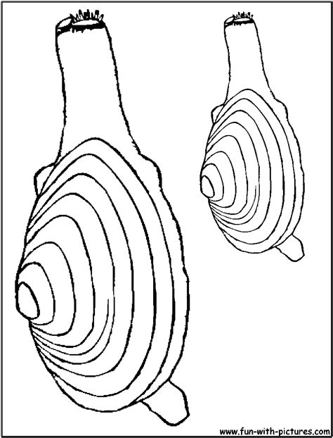 clam coloring pages coloring pages