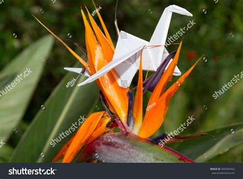 Origami In Nature - origami cranes in nature stock photo 499584352