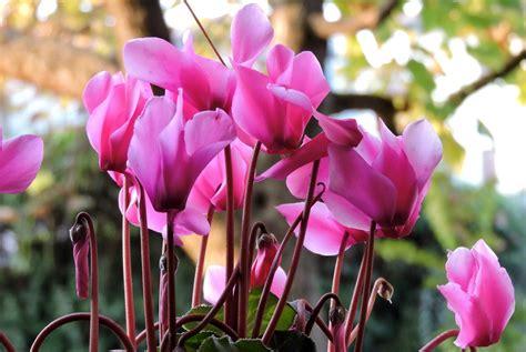 fiori ci sono a settembre fiori e colori di settembre charme and more