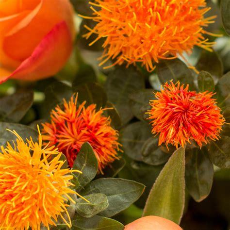 Schnittblumen Im Herbst by F 228 Rberdistel Bloomy Blumentipps Und Mehr