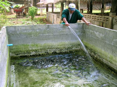 Catfish Backyard Pond by Fish Farming Tips Naijaopportunity
