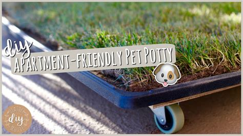 dog balcony bathroom diy apartment pet potty youtube