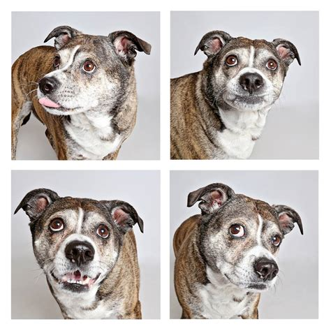 dogs in photo booth shelter uses photo booth to get dogs adopted