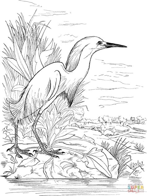 snowy egret on the lake coloring page free printable