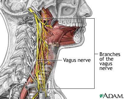 diagram of the vagus nerve vagus nerve diseases cranial nerve x diseases