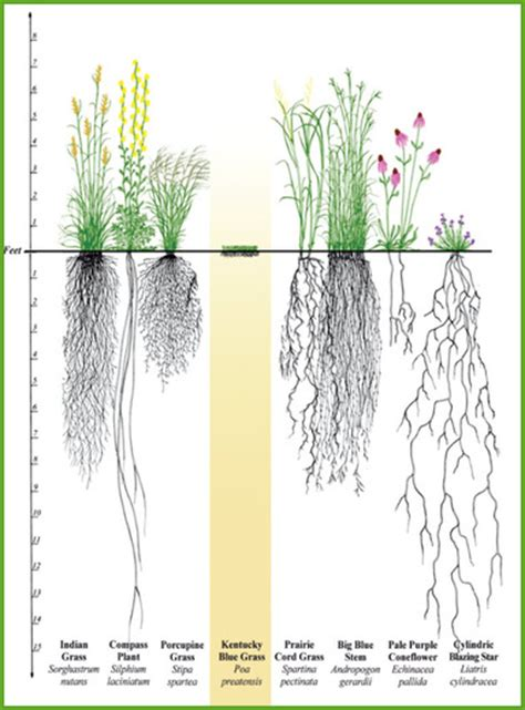 vegetable root depth plants for inland lakes michigan shoreline