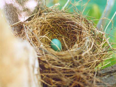 The Birds Nest the charmed bird nests on a nearly worldess wednesday