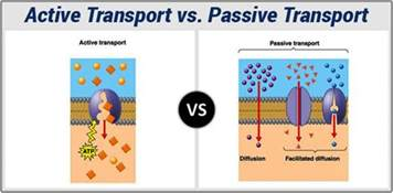 Prep Table Active And Passive Transport Comparison And Difference