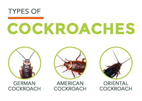 how to kill small cockroaches in kitchen free a manner flow