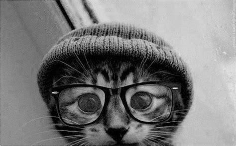 hipster tumblr oh lindo pinterest kitty cats nerd hipster cat tumblr hipsterz rule pinterest