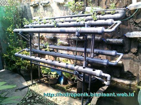 Benih Paprika Di Surabaya paralon alat hidroponik