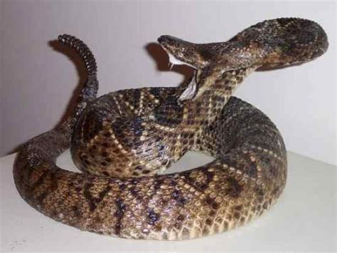 7 Most Poisonous Animals by Donz Network 10 Most Venomous Snake In The World