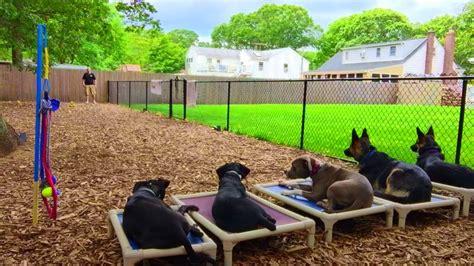dog backyard playground backyard dog playground outdoor goods
