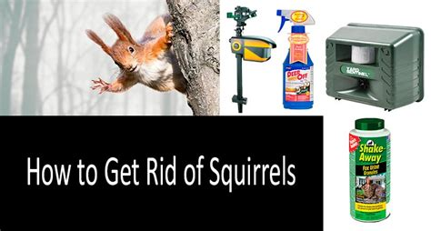 how to get rid of squirrels in the backyard how to get rid of squirrels top 6 repellents and traps