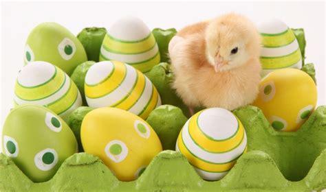 coniglio cucinato con il bimby la vera storia dell uovo di pasqua