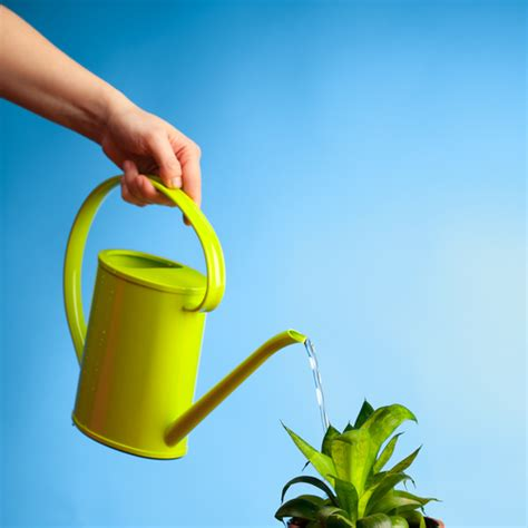 Plants That Don T Need Sun by Don T Toss It Yet Here S How To Revive A Dead Plant Back