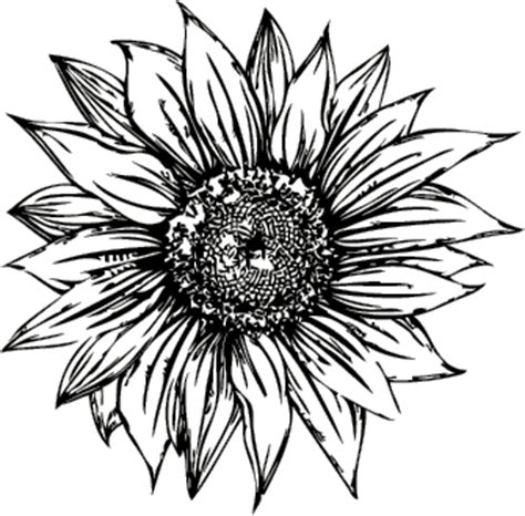 Sunflower Outline Png by A Car Car Repair Manuals And Wiring Diagrams